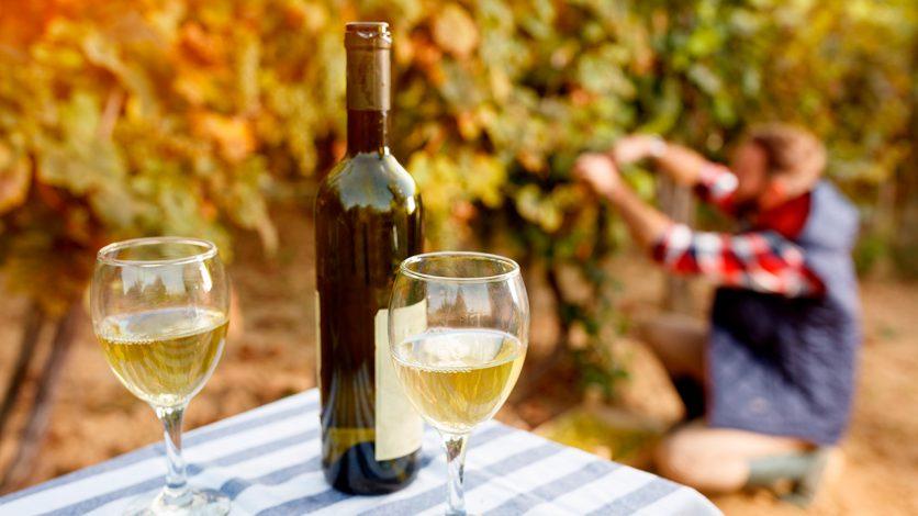 Copos de Vinho e Turismo